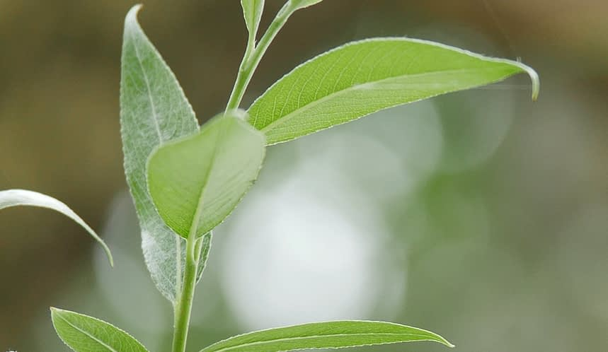 close up of a plant